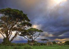 Resultado de imagen de imagenes de bosque tropical muy humedo