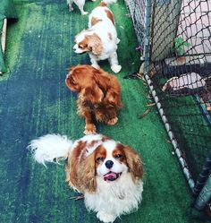 Rilten Kennels provide pet boarding service, including dog and cat boarding service to all the Melbourne Northern Suburbs. Pet Boarding, Cattery, Melbourne, Dog Cat, Corgi, Pets, Holiday, Top, Animals