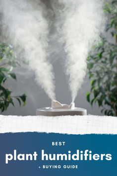 Some of the indoor plants require high-humidity. To mimic those conditions, there are various ways. But the one way that works best are plant humidifiers. Here's the brutally honest review of 17 plant humidifiers that we think are the best! Check them out.
