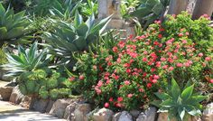 Southern California Gardening: Xeriscaping to the Rescue - lowes.com