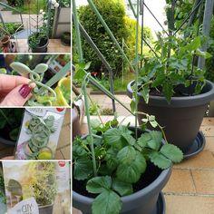 #emsawelt #emsaprodukttest Cocolinchen : EMSA - Produkttest: My City Garden