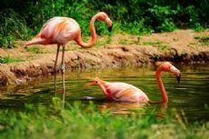 Flamingos enjoy cool summertime in Qingdao