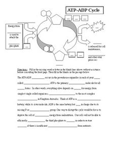 ATP ADP Cycle Worksheet Atp Biology, Enzymes Biology, Biology Textbook, Cell Respiration, Photosynthesis And Cellular Respiration, Biology Classroom, Teaching Biology, Photosynthesis Worksheet, University Of California Irvine