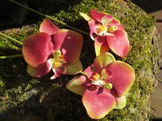 Orchideen für Deko ,Haar, Armschmuck... von Sonja Sonnenschein auf DaWanda.com