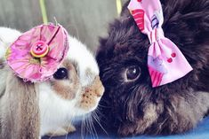 And sometimes cute animals kiss while wearing hair clips.