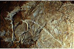 Cosquer encore - très belle tête de cheval gravée Art Pariétal, Paleolithic Art, France Europe, British Isles, Rock Art, Cave, History, Marseille, Horse Head