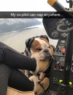 Bulldogs aviation skills are legendary.....