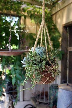 フローラのガーデニング・園芸作業日記-多肉植物 寄せ植え 吊り鉢 ハンギング