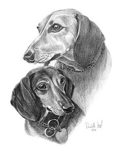pencil - Dachshunds by Dave the Drawing Guy