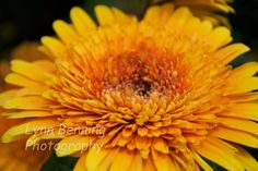 Yellow Flower by LBENNINGPHOTO on Etsy, $25.00