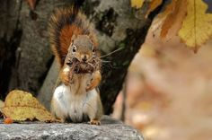 Getting ready for winter by Irene on 500px