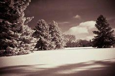 Winter in sepia
