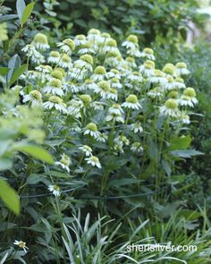 How to stake your garden perennials