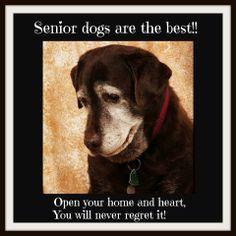 https://www.facebook.com/Everglades.Abandoned.Dog.Rescue.Inc1-800-511-DOGS http://abandoneddogrescue.org/