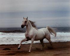 Ride a white horse along the beach