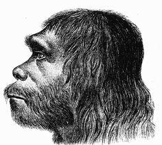 Los Neanderthales eran un homínido muy social acostumbrado cazar en grupo y abrigarse del frió en cavernas. Los Neanderthales habrían tenido un sistema de comunicación, es decir, fueron seres más sociables que sus antecesores y acostumbraban enterrar a sus muertos (evidencia de un pensamiento filosófico)