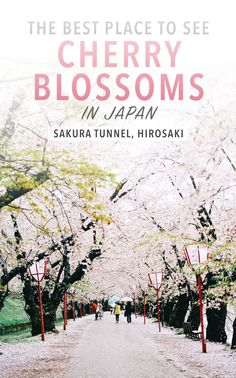 There are so many beautiful places in Japan to see cherry blossoms, but Hirosaki is a hidden treasure few tourists find. Read these travel tips on why you should visit Hirosaki to see Japan in Spring!