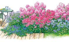 Das auf offener Fläche zwischen Rasen und Terrasse gelegene Beet ist 1,5 x 3 Meter groß und macht dank abwechslungsreicher Höhenstaffelung von allen Seiten betrachtet eine gute Figur. Zwischen Juli und September ist die Blütenpracht am schönsten.