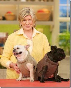 dog sweater free knitting pattern