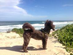 Make the committment to 100 Happy Doggy Days! #100happydoggydays
