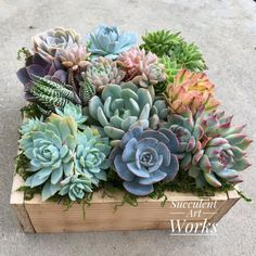 A dozen Succulents in an 8 rustic wooden planter Valentines Day Gift hostess gift business gift housewarming wedding or sympathy gift Succulent Planter Diy, Succulent Gifts, Succulent Centerpieces, Succulent Arrangements, Succulent Care, Planter Pots, Fall Planters, Succulents In Containers, Cacti And Succulents