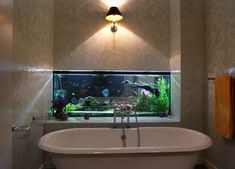 10 Beautiful In-Wall Aquariums