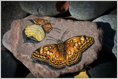 Mexican Fritillary Butterfly on Lake Superior Stone by StonewingsbyOshi on Etsy