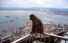 gilbrator | More about Gibraltar