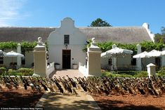 The Vergenoegd Wine Estate vineyard, in South Africa, is famous for its army of 900 Indian runner ducks which are used to keep the vines free of pests. Runner Ducks, Bizarre News, Belgian Style, Family Picnic, Family Travel, Strange Photos, African Countries, Cape Town, South Africa