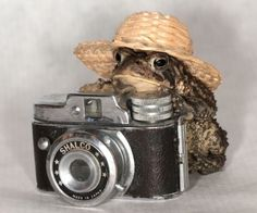Baby Animals, Funny Animals, Cute Animals, Animal Original, Pet Frogs, Frog Pictures, Funny Frogs, Frog Art, Photocollage