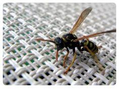 Mamiweb.de - Insektenstiche: Erste Hilfe bei Wespenstich und Co.