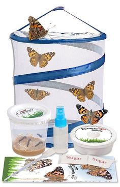 ❤ Toy Kids Building Insect Lore Live Cup Of 10 Caterpillars To Butterflies Butte