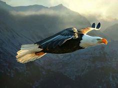 Flying fighting Sheepdog! : Photo