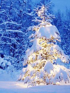 Animated Christmas Tree <3