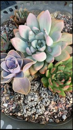 Succulent Planter Diy, Succulent Gardening, Diy Planters, Cacti And Succulents, Planting Succulents, Succulent Containers, Vegetable Gardening, Container Gardening, Indoor Gardening