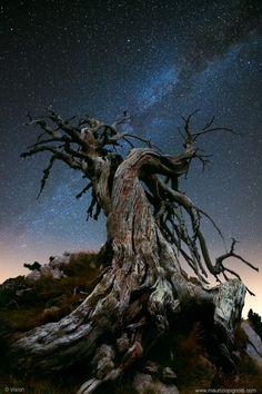 Questa e' per me la vera foto che rappresenta il Parco nazionale del Pollino. Un'incanto nella magia.
