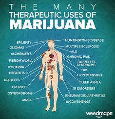 The Many Uses of Marijuana Therapeutic Medical Marijuana Cannabis Epilepsy, Gliomas, Alzheimer, fibromyalgia, dystonia, hepatitis C , Diabetes, Pruritis, Osteoporosis, MRSA, Huntington's Disease, Multiple Sclerosis, ALS, Tourette's Syndrome, HIV, Sleep Apnea, GI Disorders, Rheumatoid Arthritis