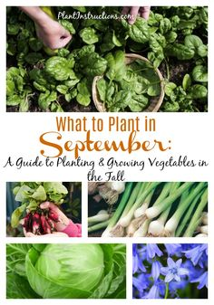 What to Plant in September: A Guide to Planting & Growing Vegetables in the Fall Backyard Vegetable Gardens, Veg Garden, Edible Garden, Garden Care, Fall Vegetables, Planting Vegetables, Growing Vegetables, Herb Garden Design, Vegetable Garden Design