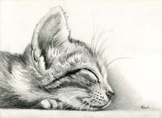 Sleeping Kitten by art-it-art.deviantart.com on @deviantART...Graphit, Bleistift Zeichnung auf 200 Gramm Künstlerpapier ...Tiger Kitten ...original Pencil drawing ...Format: 18 x 25 cm - 7 x 10 inches