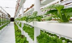 vertical farming noun
