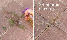 Préparez un désherbant naturel en 5 minutes, qui détruira les mauvaises herbes en 24 h!