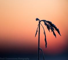 Colors Of The Setting Sun. Lapland-themed nature art from Rovaniemi, Finland