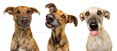 Photograph The Goofies by Elke Vogelsang on 500px