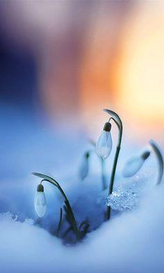 Spring tender ...