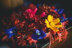 Native flowers at Barefoot Resorts, Havelock, Andamans