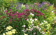 How to create a perennial flower garden borders Garden Border Plants, Flower Garden Borders, Garden Shrubs, Landscaping Plants, Lawn And Garden, Herbaceous Border, Herbaceous Perennials, Flowers Perennials, Perennial Ground Cover