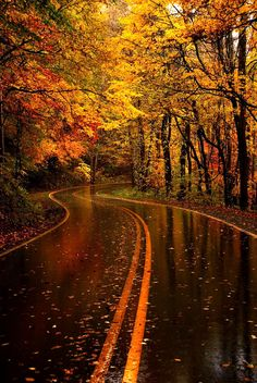 The best photos of beautiful landscapes from all around the earth. Outdoor Photography, Landscape Photography, Nature Photography, Photography Poses, Natur Wallpaper, Beautiful Places, Beautiful Pictures, Autumn Scenes, Autumn Aesthetic
