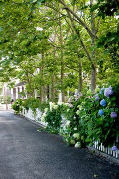 hydrangias cascading over a white picket fence / garden delights / nantucket Picket Fence Garden, White Picket Fence, Garden Fencing, Garden Landscaping, Picket Fences, White Fence, Garden Gate, Nantucket Cottage, Nantucket Island