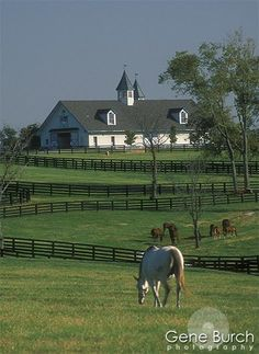 Beautiful farm and horses! I love horse country like this! Country Barns, Old Barns, Country Life, Country Living, Country Style, Country Roads, Country Houses, Country Charm, Dream Barn