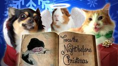 Pets Read Twas The Night Before Christmas - YouTube